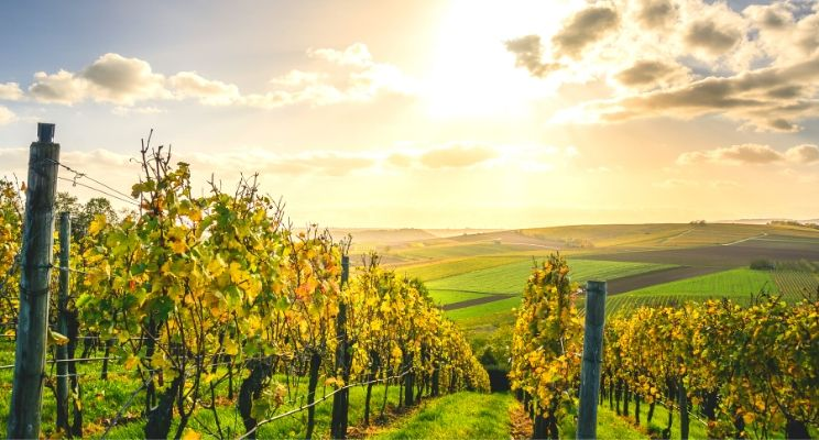 Cosa sono i vini vegani e quali sono i migliori