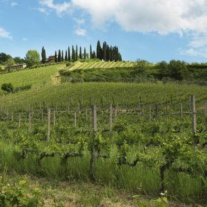 Querciabella. Greve in Chianti. A bucolic setting. One of the finest winery in all Italy. This is Querciabella..